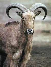 الحيوانات التي مهددة بالانقراض (صور بدون مفاهيم)